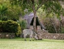 Hornbill Lodge – Kariba, Zimbabwe – 2 nights