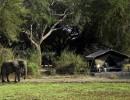 Flatdogs Camp – South Luangwa, Zambia – 3 nights